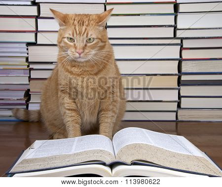 Orange Tabby Cat appearing to read a book with piles of books in the background.