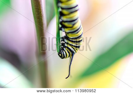 macro image of butterfly caterpillar