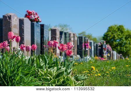 Aligned Headstones In A Cemetary