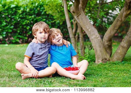 Two little boys picking cherries in garden, outdoors.