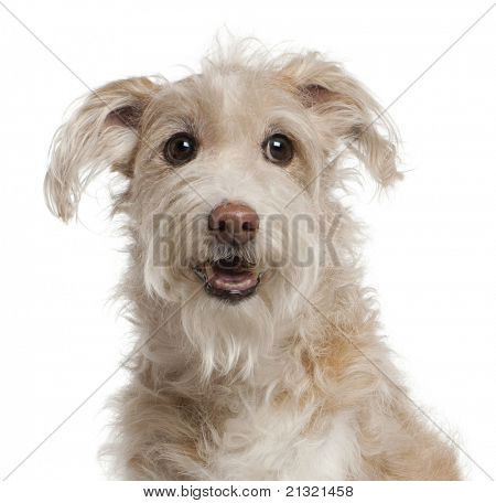 Close-up of Mixed-breed dog, 14 years old, sitting in front of white background