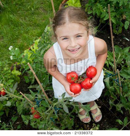 Vegetable garden - little gardener with harvests of organic tomatoes