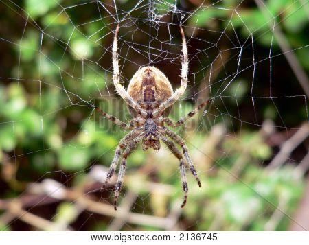 Spider1A