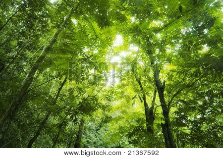 Sunbeam shine through the green forest