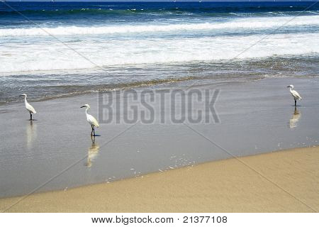 Birds on the Ocean Shore