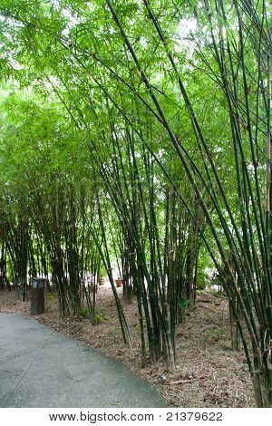 Pathway To The Green Bamboo Garden