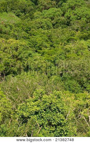 Selva densa