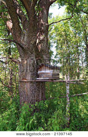 wooden hive in oak wood