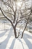 Bright Winter Morning poster