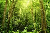 picture of tropical rainforest  - Tropical Rainforest Landscape - JPG