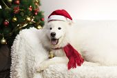 White Dog In A Red Scarf And Hat. poster