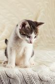White Cute Kitten With Tabby Head Sitting On Knitted Blanket poster
