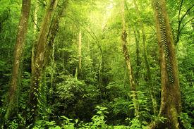 picture of rainforest  - Tropical Rainforest Landscape - JPG