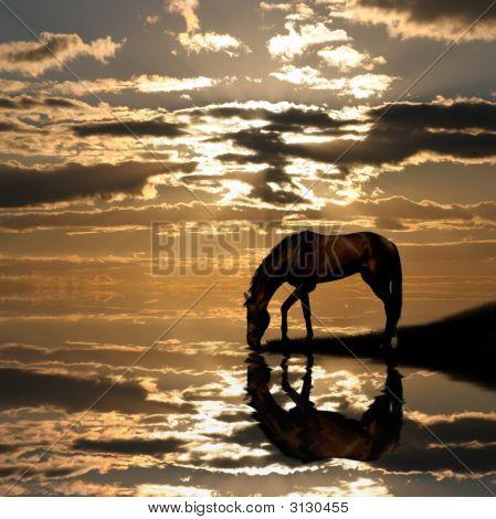 Horse On Sunset