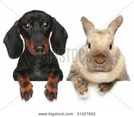 Conejo y perro. Retrato de primer plano