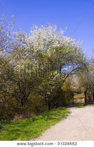 Gate to spring