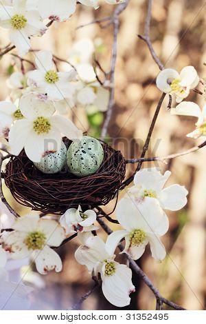 Springtime Eggs And Nest