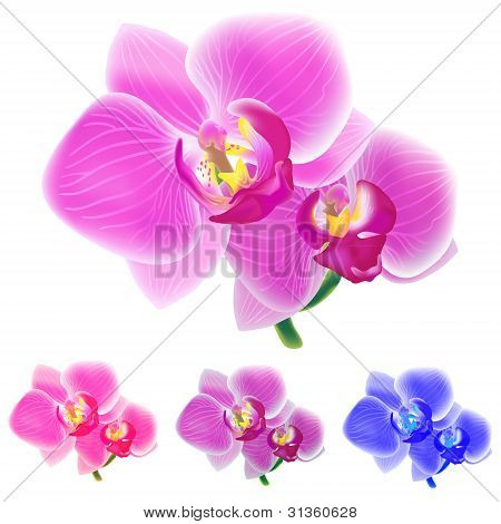 Four colored orchids isolated on white background