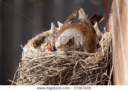 bird in the nest