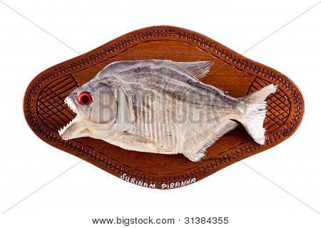 Piranha fish as trophy on wood isolated