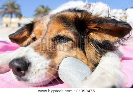 Dog with a stone