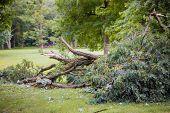 Storm Damage, Tree Broken After Hurricane Storm Fallen Tree After A Storm. poster