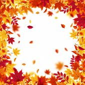 Autumn Falling Leaves. Nature Background With Red, Orange, Yellow Foliage. Flying Leaf. Season Sale. poster