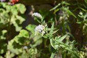A White Fuzzy Flower In The Garden poster