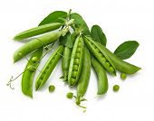 Green peas with twig leaf and pods. Vegetable still life, isolated on white background. poster