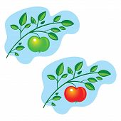 foto of apple tree  - Apple Tree Branch fresh fruit leaves nature food - JPG