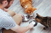 Owner Feeds The Dog And The Cat Together. Two Empty Bowls. Kitchen. Close-up. Pet Food Concept poster