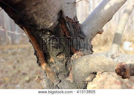 Damaged Tree