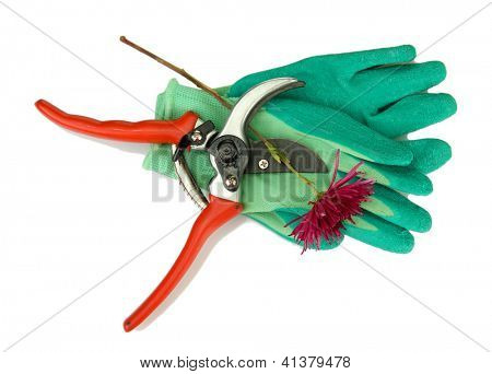 Secateurs with flower isolated on white