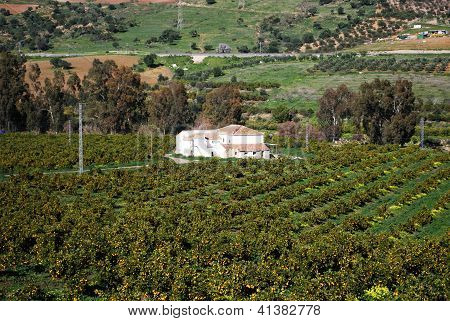 Orange grove and farm, Andalusia, Spain.