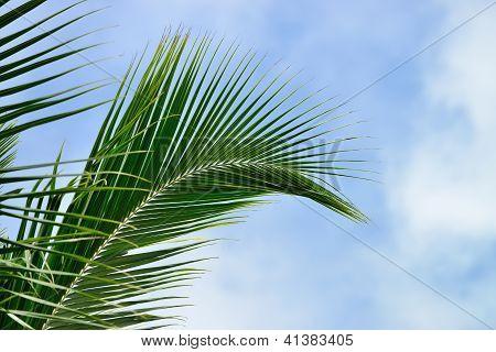Palm Tree Branch