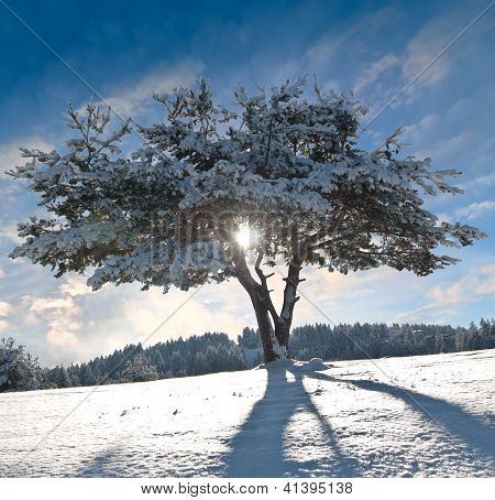 Winter tree II