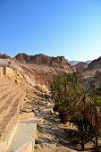 picture of tozeur  - Spectacular Canyon Chebika and green palm trees  - JPG
