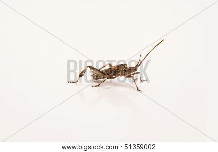 Insect Invertebrate