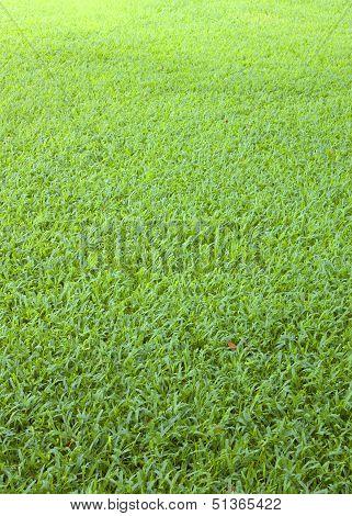 Golf Green Grass Background On A Flat Surface.