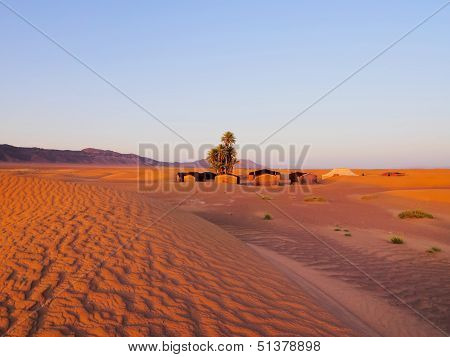 Oasis On The Desert, Morocco