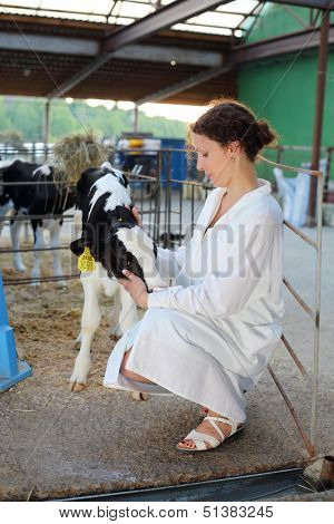 Beautiful woman in white robe caresses small cute calf in big cow farm.