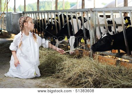 Cute girl in white robe feeds of hay small calves at large farm.