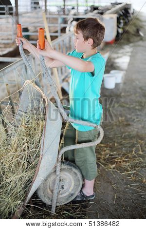 Boy in green works with a wheelbarrow and hay at large cow farm.