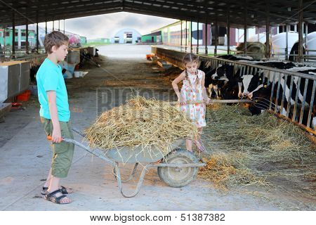 Boy keeps trolley with hay and girl loads hay by pitchfork at cow farm.