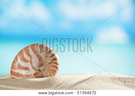 small nautilus shell  with ocean , beach and seascape, shallow dof
