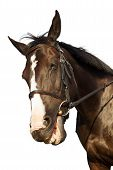 stock photo of low-necked  - Horse portrait smiling isolated over white background - JPG