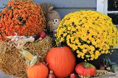 pic of maize  - Arrangement from Flowers Bale of Hay Pumpkin Squashes Apples Maize Scarecrow in front of Old Barn as decoration for Thanksgiving Day - JPG
