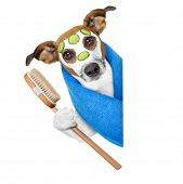 picture of beside  - dog with a beauty mask beside a blank banner - JPG