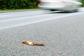 Squirrel Roadkill