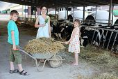 Boy keeps trolley with hay and girl loads hay by pitchfork and mother stands near their at cow farm.